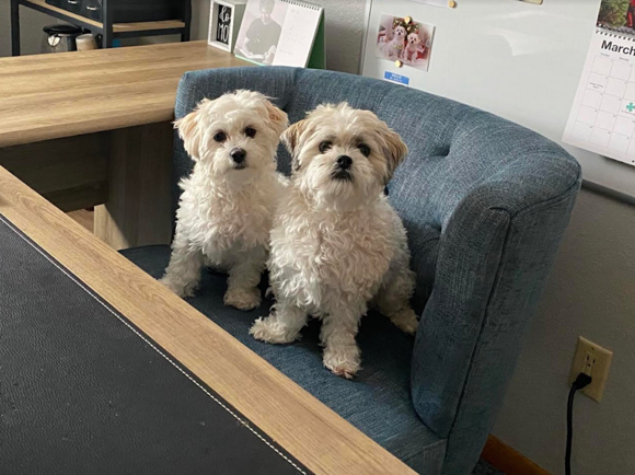 Office Dogs